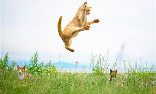 Divertidas y Adorables Fotografías De Gatos Ninjas