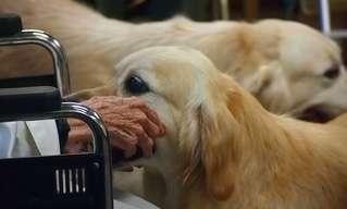 Este Perro Ayuda A Su Amo A Hablar