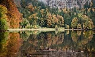 Una Colección De TodoMail: La Belleza De Los Bosques