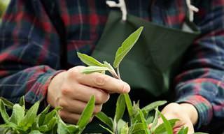 6 Consejos Para Cultivar Un Jardín De Hierbas