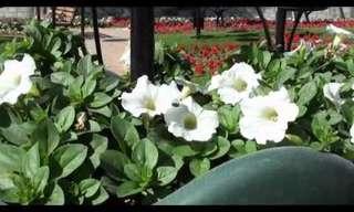 El Fantástico Jardín Al Ain