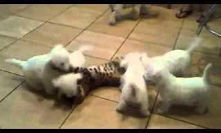 ¡Adorables Cachorros Al Ataque!