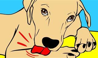 ¿Por Qué Los Perros Se Lamen Las Patas?