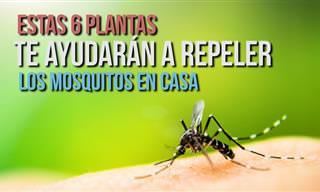 Acaba Con Los Mosquitos En Casa Con Una De Estas 6 Plantas