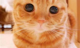 Los 24 Gatitos Más Lindos Del Mundo. ¡Quiero Uno Para Mí!