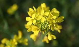 Esencias De Flores Para Mejorar Nuestro Bienestar