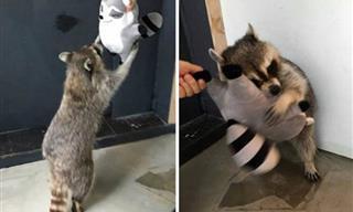 16 Lindas Fotos De Animales Con Sus Peluches Preferidos