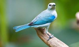 Las Hermosas Aves De Costa Rica