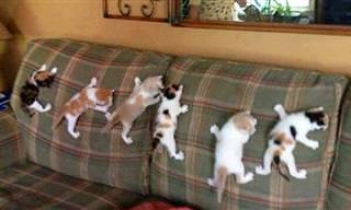 ¿Hay Algo Que Los Gatos No Puedan Escalar?