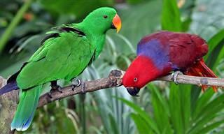 Los 10 Loros Más Coloridos y Hermosos Del Mundo