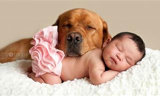 Hermosas Imágenes De Bebés Junto a Sus Cachorros