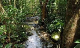 Bosques Cuya Belleza Está Amenezada...
