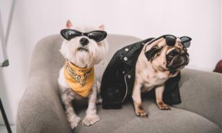 Elimina El Olor a Orina De Tu Perro En Casa