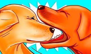 La Razón Por La Que Los Perros Se Muerden La Boca Cuando Juegan