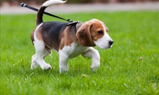 10 Consejos De Adiestramiento Que Todo Dueño De Perros Debería Conocer