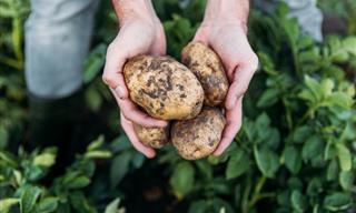 Estos 8 Alimentos Fueron Odiados En La Antigüedad