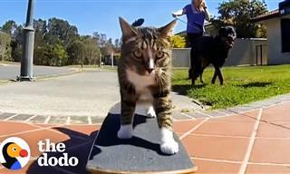 ¿Viste Alguna Vez Gatos Capaces De Hacer Semejantes Cosas?