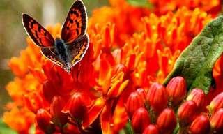 La Primavera Llega Con Todos Sus Colores