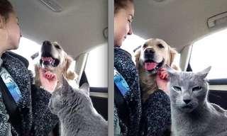 Resumen Felino De La Vida Amorosa Humana