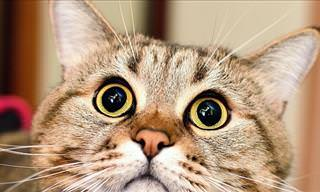 Jamás Había Visto a Un Gato Hacer Esto