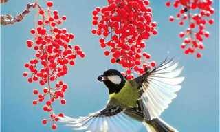 Fotografías artísticas de Pájaros Por John Y Fish