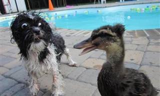 A Estos 17 Perros Les Asustan Las Cosas Más Extrañas...