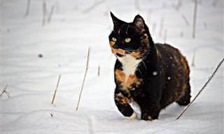 5 Consejos Para Cuidar a Tu Mascota En Invierno