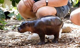 ¿Acaso Viste Hoy Algo Más Lindo Que Estos 9 Animales Bebé?
