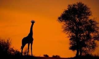 El Secreto De Las Sombras Africanas...