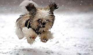 Los Perros Y La Nieve: Un Amor Mágico