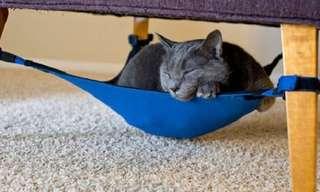 ¿Deseas Mimarte a Ti y a Tu Gato?, ¡Mira Esto!