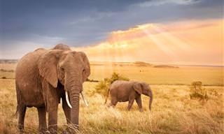 Te Damos 30 Motivos Para No Visitar África