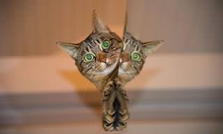 Chiste:  Ladrones y Gatos
