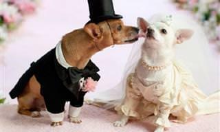 Cuando Los Animales Se Casan... ¡Absolutamente Tierno!