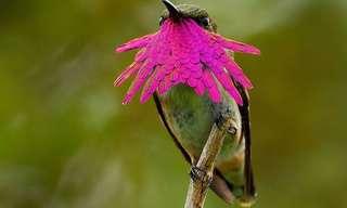 El Colibrís: Una Ave De Majestuosa Belleza