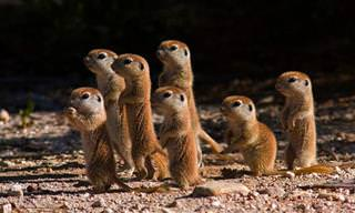 15 Tiernas Fotos De Animales Bebés