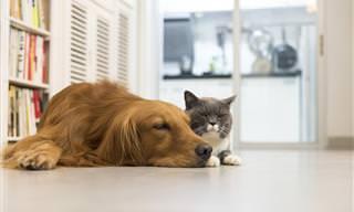 El Vínculo De Amistad Entre Un Gato y Un Perro Ansioso