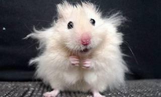 Lindos Animales Con Peinados Divertidos