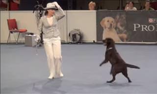 Bailar Con Perros Es Tan Divertido...