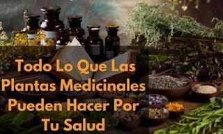 Una Recopilación De Artículos Sobre Plantas Medicinales
