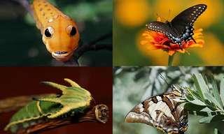19 Asombrosas Transformaciones De Orugas
