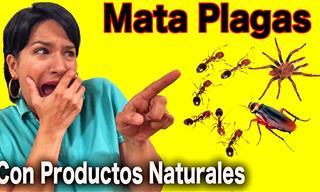 Cómo Acabar Con Las Plagas Usando Productos Naturales