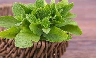 10 Hierbas Muy Saludables y Fáciles De Cultivar En Casa