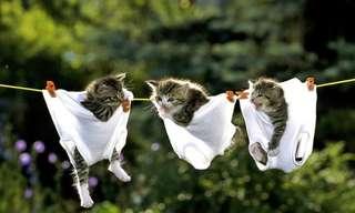 ¡Otro Nuevo Día De Gatos Para Festejar!