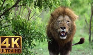 Los Animales Salvajes De África En Todo Su Esplendor