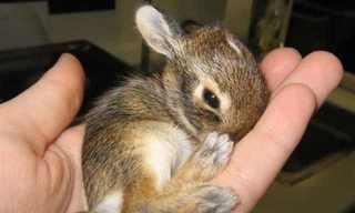 Imágenes Adorables De AnimalesBebé