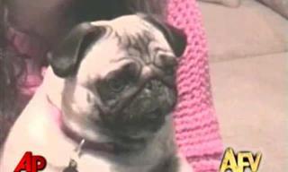 Los Videos Más Divertidos De Nuestros Queridos Animales