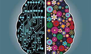 Los Hemisferios Cerebrales: Descubre Cuál Es El Predominante