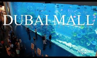 Un Recorrido Por Centro Comercial Más Grande y Opulento En Dubai