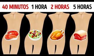 Cuánto Tiempo Permanecen Tus Alimentos En Tu Estómago